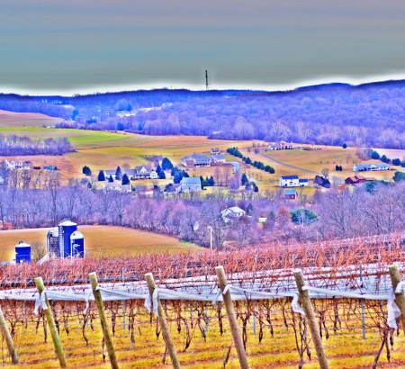 Vineyard Scenic View (HDR) - Sample Photo/Poster Image